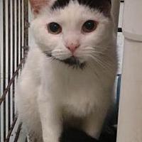 Adopt A Pet :: Aahan - Ashtabula, OH