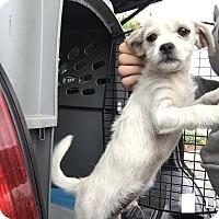 Adopt A Pet :: Tony - Austin, TX