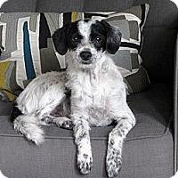 Adopt A Pet :: Frannie - Santa Monica, CA