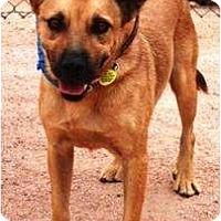 Adopt A Pet :: Lucky - Gilbert, AZ