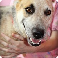 Adopt A Pet :: Ryan - Justin, TX