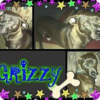 Adopt A Pet :: Grizzy - Alamosa, CO