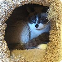 Adopt A Pet :: Cathy - Ogallala, NE