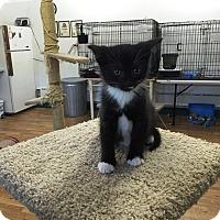 Adopt A Pet :: Ed - Speonk, NY