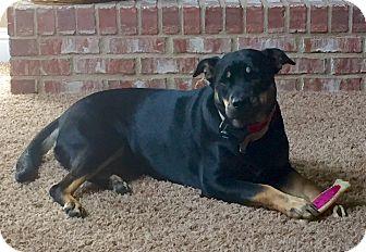 Rottweiler Mix Dog for adoption in Smyrna, Georgia - Zoe