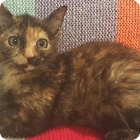 Adopt A Pet :: Korynn and Vivienne - Sunderland, ON