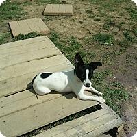 Adopt A Pet :: June Bug - Huntington, IN