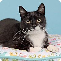 Adopt A Pet :: Rico - Wilmington, DE