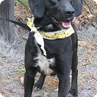 Adopt A Pet :: Buddy - Voorhees, NJ