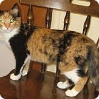 Adopt A Pet :: Gigi - Modesto, CA