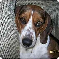 Adopt A Pet :: Gracie-ADOPTED - Indianapolis, IN