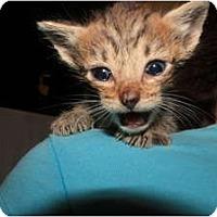Adopt A Pet :: Sonny - Miami, FL