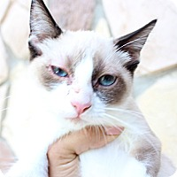 Adopt A Pet :: Skylar - Santa Monica, CA