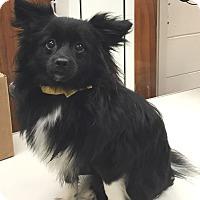 Adopt A Pet :: Neptune - Orlando, FL