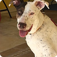 Adopt A Pet :: Owen - Albuquerque, NM