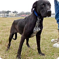 Adopt A Pet :: Marley - St. Francisville, LA