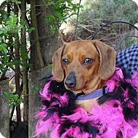 Adopt A Pet :: CINDY - Portland, OR