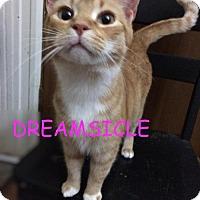 Adopt A Pet :: Dreamsicle - Washington, DC