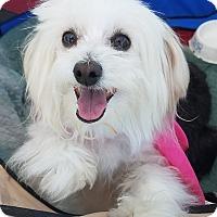 Adopt A Pet :: Finding Dori - Canoga Park, CA