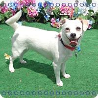 Adopt A Pet :: CHASE - Marietta, GA