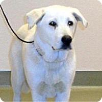 Adopt A Pet :: Oso - Wildomar, CA