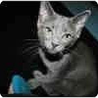 Adopt A Pet :: Scribble & Scrabble - Lake Ronkonkoma, NY