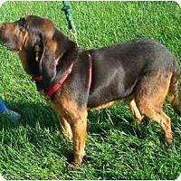 Adopt A Pet :: HANK - Georgetown, KY