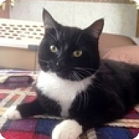 Adopt A Pet :: Vegas - Vancouver, BC