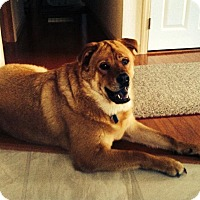 Adopt A Pet :: Ruger - Courtesy Post - Rochester/Buffalo, NY