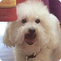 Adopt A Pet :: Penny - East Hanover, NJ