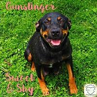 Hound (Unknown Type) Mix Dog for adoption in Washburn, Missouri - Gunslinger
