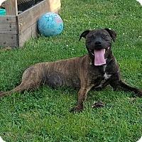 Adopt A Pet :: Turbo - Des Moines, IA