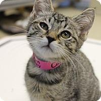 Adopt A Pet :: Cassidy - Medina, OH