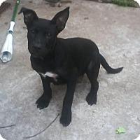 Adopt A Pet :: Batman - Houston, TX