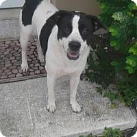 Adopt A Pet :: GEORGIA - Hollywood, FL