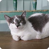 Adopt A Pet :: Kix - San Antonio, TX