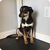 Adopt A Pet :: Pixar - Harrisonburg, VA