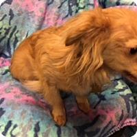 Adopt A Pet :: DOBBY - Elk Grove, CA