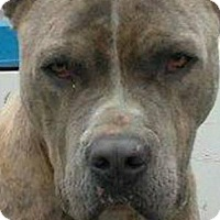 Adopt A Pet :: R RESCUE: ROMEO - Akron, OH