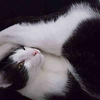 Adopt A Pet :: Nabisco - Gaithersburg, MD