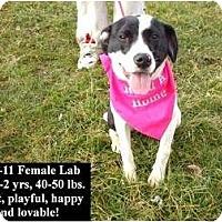 Adopt A Pet :: # 733-11 @ Animal Shelter - Zanesville, OH