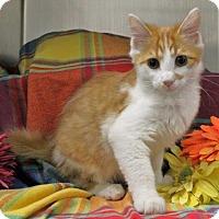 Adopt A Pet :: Casper,Crypt & Candy - Arlington, VA