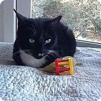 Adopt A Pet :: Nahla - Alamo, CA