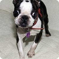 Adopt A Pet :: Aubry - Cumberland, MD