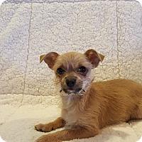 Adopt A Pet :: Scrappy Doo - Homewood, AL
