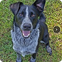 Adopt A Pet :: Mojo - Adoption pending - Midwest (WI, IL, MN), WI