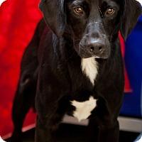 Adopt A Pet :: Demitrius - Erwin, TN