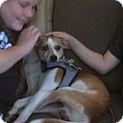Adopt A Pet :: Pippi Long Legs