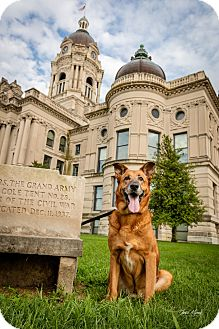 German Shepherd Dog Mix Dog for adoption in Evansville, Indiana - Bubby