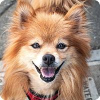 Adopt A Pet :: Duncan - St Helena, CA